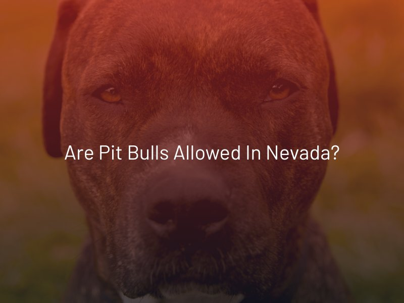 Are Pit Bulls Allowed in Nevada_