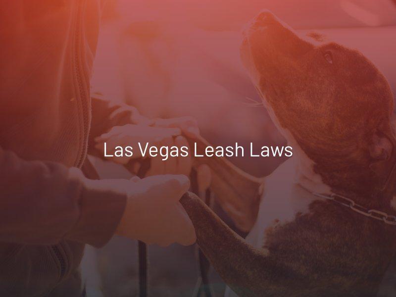 Las Vegas Leash Laws